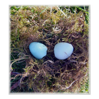 Empty Robin Eggs Poster
