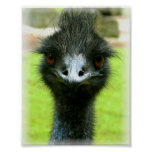 EMU BIRD PHOTO PORTRAIT POSTER