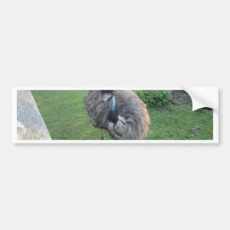 Emu Bumper Sticker