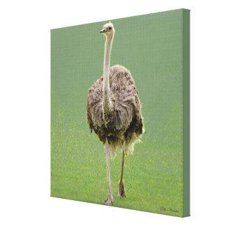 Emu Canvas Print