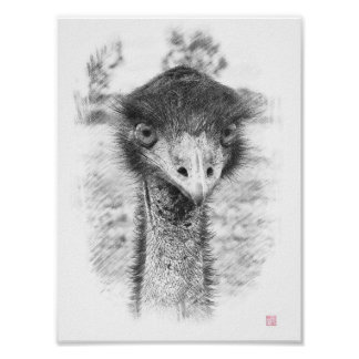 Emu Drawing Posters