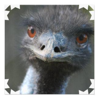 Emu  Invitations
