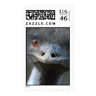Emu  Postage Stamp