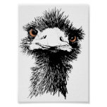 Emu Póster