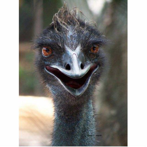¡Emu que dice el HI! Fotografía principal de un em Fotoescultura Vertical