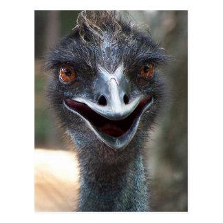 ¡Emu que dice el HI! Imagen grande de los ojos del Postales