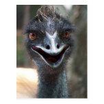 ¡Emu que dice el HI! Imagen grande de los ojos del Postal