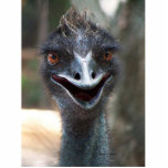 Emu saying hello! Head photograph picture design Photo Cut Outs