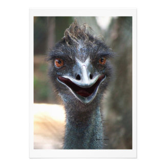 Emu saying HI! Open beak big brown eyes picture Custom Invites