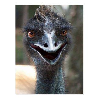 Emu saying HI! Open beak big brown eyes picture Post Cards