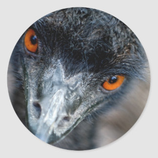 Emu watching classic round sticker