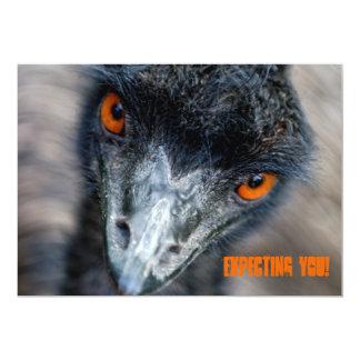 Emu watching, expecting you! card
