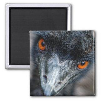 Emu watching magnet
