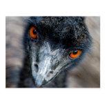 Emu watching post card
