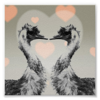 Emus in love poster