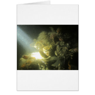 en botervisje1 del krab tarjeta de felicitación