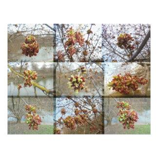 En color del cervatillo de la mula fotografías