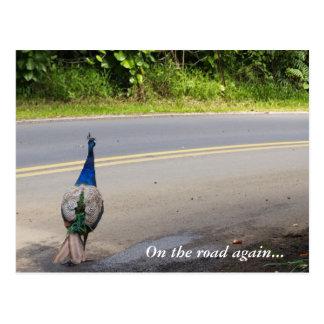 En del camino la postal del pavo real de Maui otra