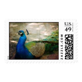 En descanso timbres postales