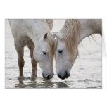 En el agua en la tarjeta de felicitación del cabal