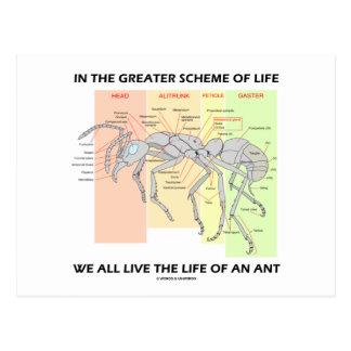 En el mayor esquema de la vida viva de la vida de  tarjeta postal