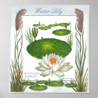En el poster del lirio de agua del ~ del jardín póster