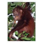 En el salvaje: Orangután Tarjeta De Felicitación