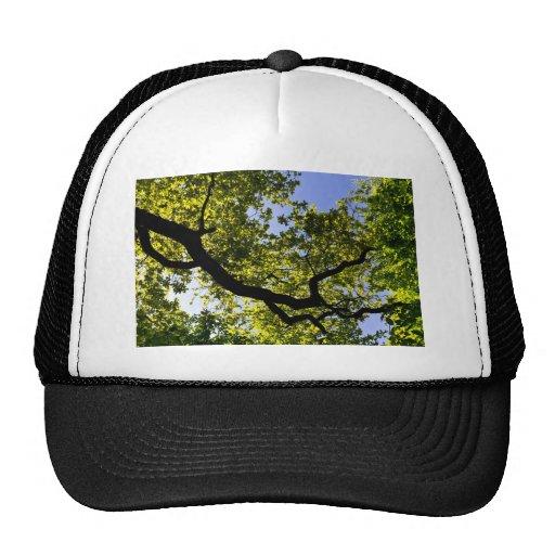 En el toldo de árbol gorras de camionero