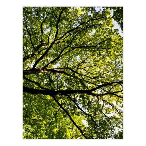En el toldo de árbol postales
