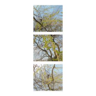 En el viento fotografías