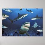 En entre los tiburones posters