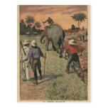 En francés Congo, el elefante entrenó al arado Postales