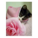 en gatito de la manta de la muñeca postales