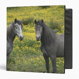 """En Irlanda occidental, dos caballos con de largo Carpeta 1 1/2"""""""
