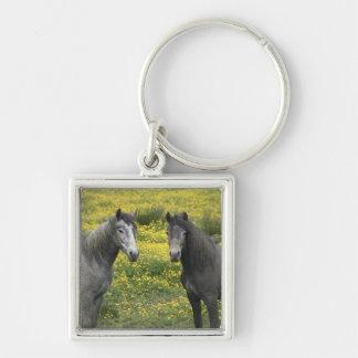 En Irlanda occidental, dos caballos con de largo Llavero Cuadrado Plateado