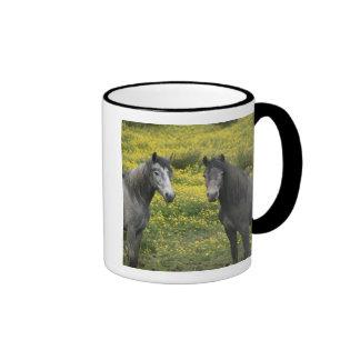 En Irlanda occidental dos caballos con de largo Taza