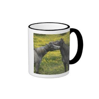 En Irlanda occidental dos caballos nuzzle en a Tazas