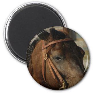 En la demostración del caballo imán redondo 5 cm