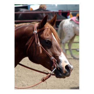 En la demostración del caballo tarjeta postal