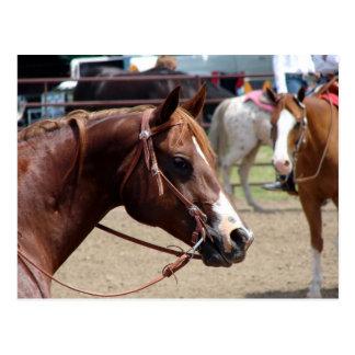 En la demostración del caballo postal