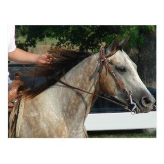 En la demostración del caballo tarjetas postales