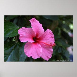En la floración impresiones