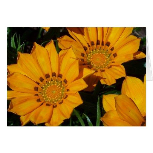 En la floración tarjetón