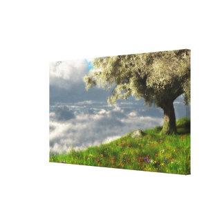 En la lona envuelta del borde del mundo (primavera impresión en lona estirada