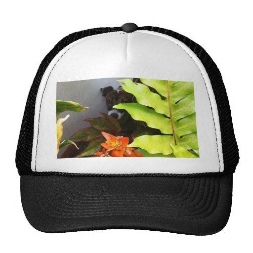 En la ocultación gorra