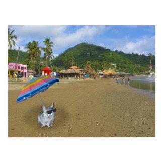 En la playa con Ernesto la chinchilla Postal