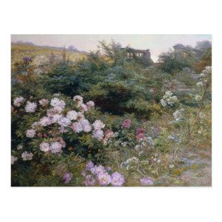 En la plena floración tarjeta postal