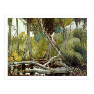 En la selva, la Florida de Winslow Homer Tarjeta Postal