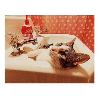 En la tarjeta del gatito del fregadero tarjeta postal