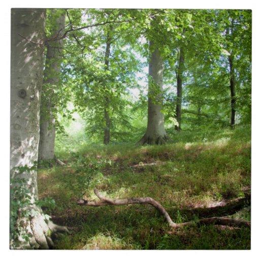En la teja del bosque